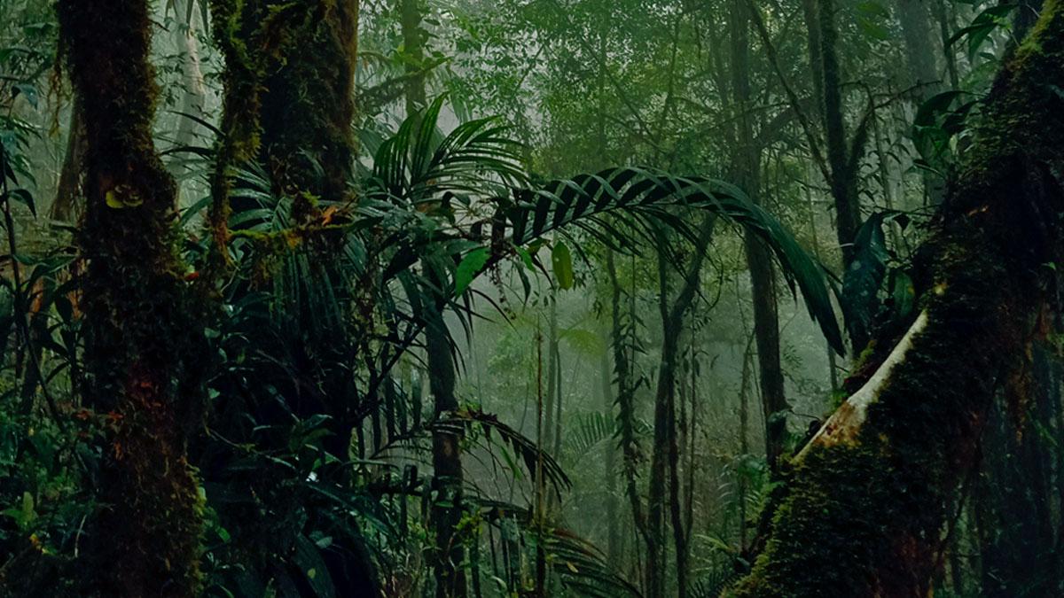 Rahasia Kuno yang Terpendam di GunungLatimojong