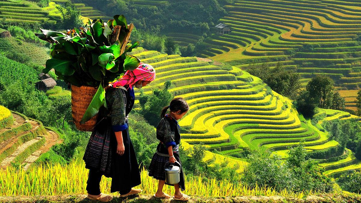 Tay, Suku Kuno di Asia Tenggara dan Jazirah Arab: Pionir PertanianPadi